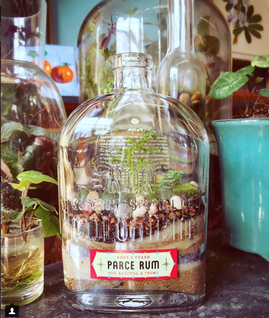 NT Parce Rum Bottle Terrarium